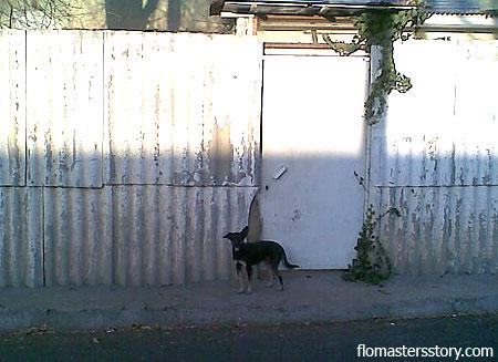 собаки нашего городка