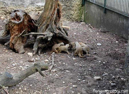 экскурсия по  зоопарку