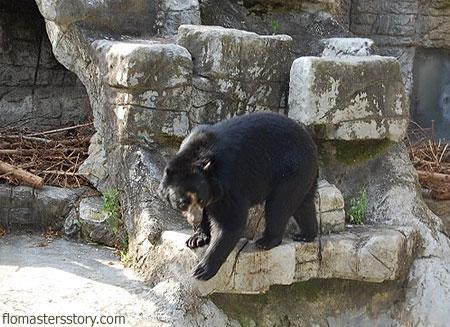 медведи в зоопарке