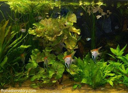 морские аквариумы зоопарка швейцарского Базеля