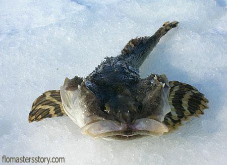 рыбы Сахалина