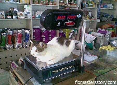 кошка на весах