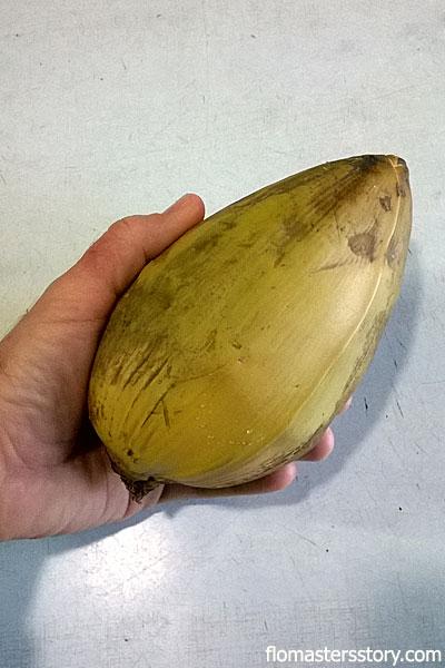 банановая пальма фото