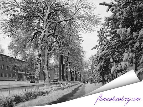 черно-белые фотографии зимы