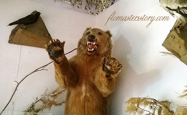 медведь чучело