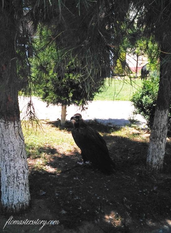 орел на цепи