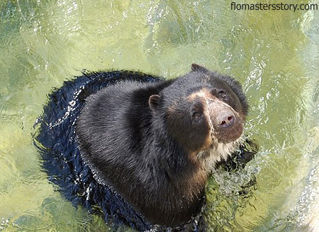 медведи в зоопарке Базеля