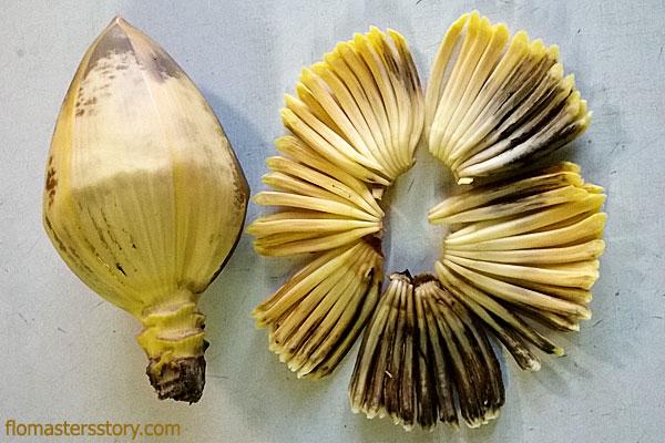 пальма фото