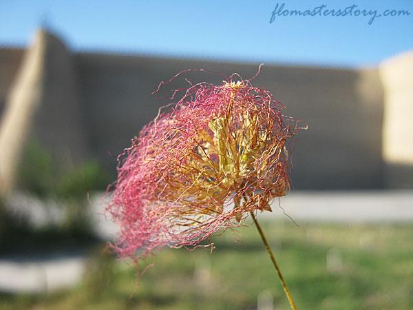 цветок из Бухары