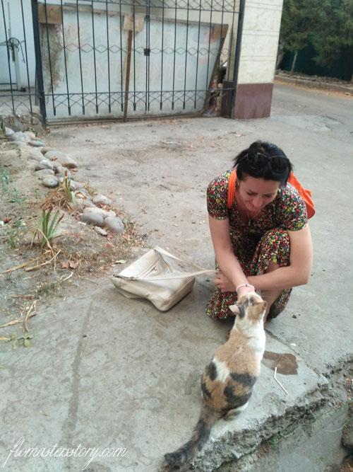кошки Ташкента