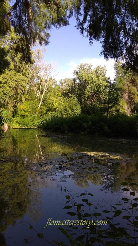 пруд ботанического сада
