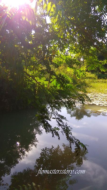 солнечный пруд