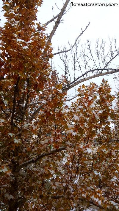 зима в Ташкенте